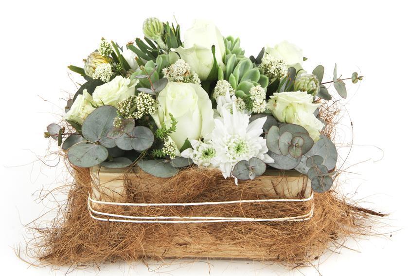 Rose & Succulent (3)