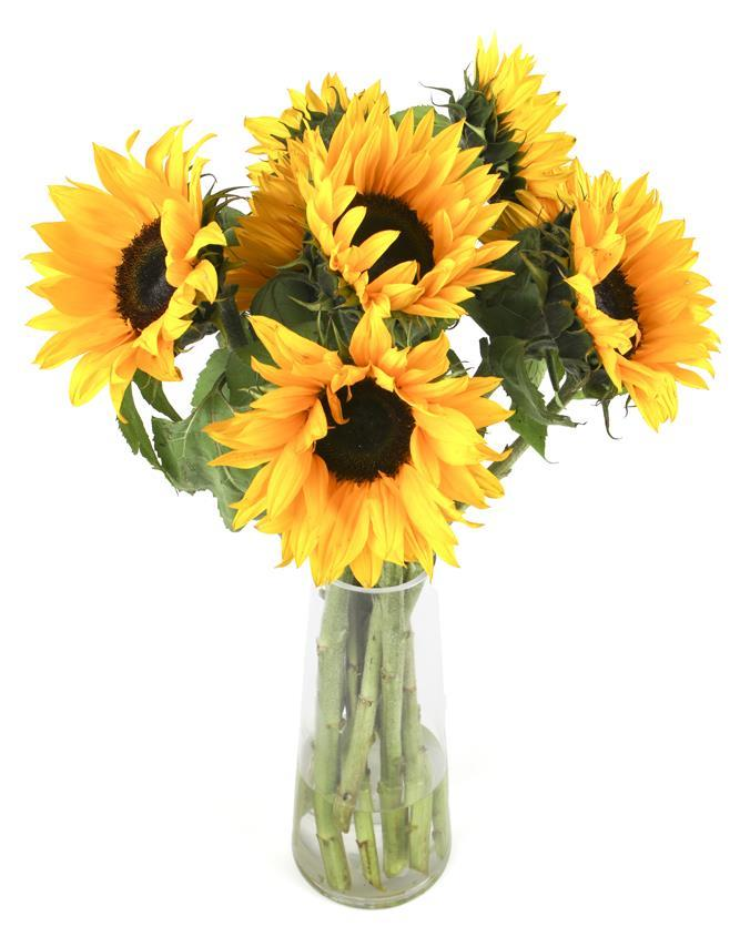 Sunflower Vase (1)